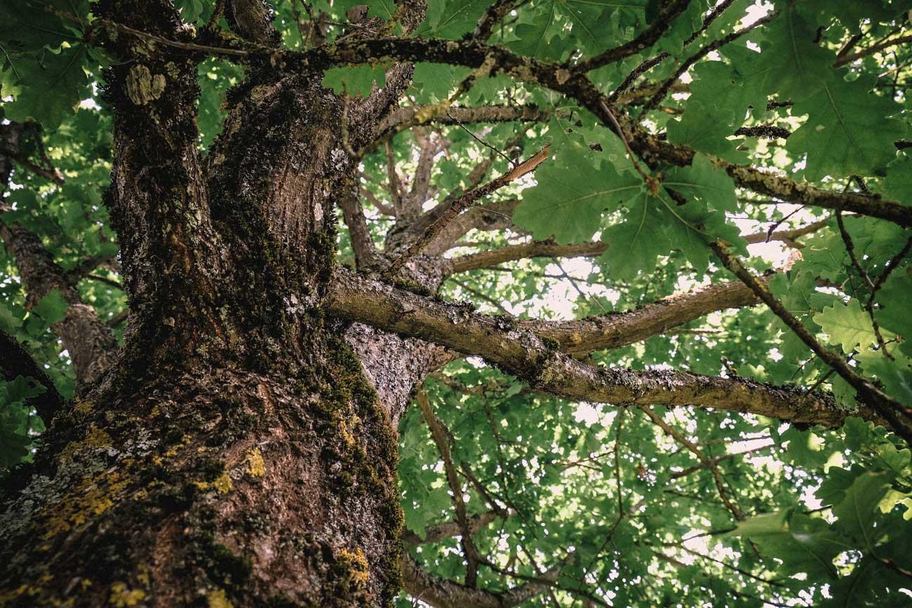 der baum bleibt. natürliche hangsicherung und bauen mit der natur